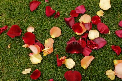 Rose petals on the ground